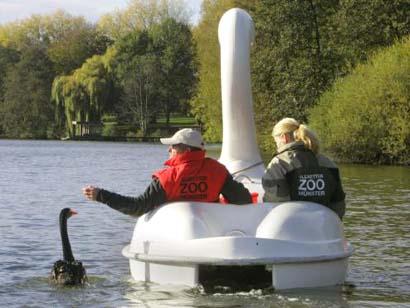 swanboat.jpg