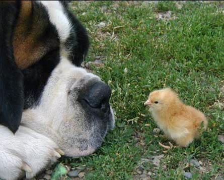 dogchick.jpg