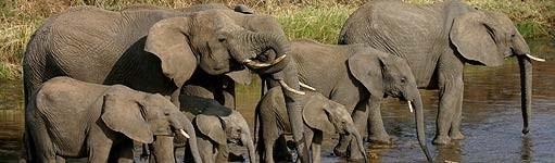 elephant_sholley.jpg